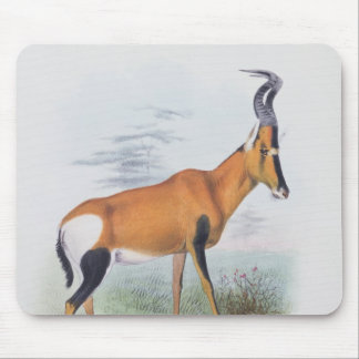 Antelope, from 'The Book of Antelopes', Mouse Pad