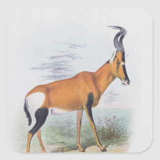 Antelope, from 'The Book of Antelopes', Square Sticker