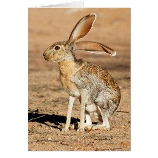 Antelope Jackrabbit Card