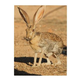 Antelope jackrabbit portrait, Arizona Wood Canvas
