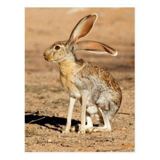 Antelope Jackrabbit Postcard