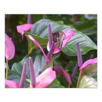 Anthurium Flower with Butterfly 20 x16 Photo