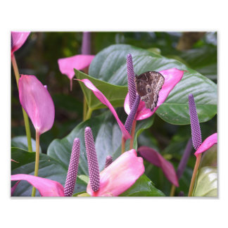 Anthurium Flower with Butterfly 8 x10 Photo