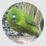 Antipodes Island Parakeet Classic Round Sticker