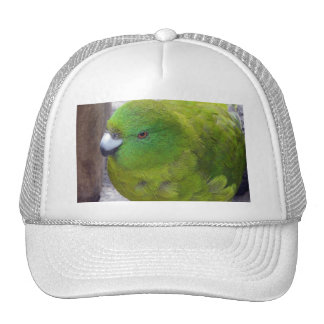 Antipodes Island Parakeet Hat