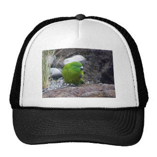 Antipodes Island Parakeet Trucker Hat