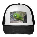 Antipodes Island Parakeet Hats