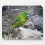 Antipodes Island Parakeet Mousepad
