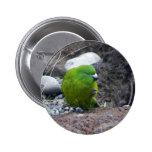 Antipodes Island Parakeet Pinback Button