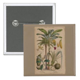 Antique Botanical Print - Tropical Fruit Button