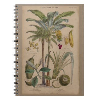 Antique Botanical Print - Tropical Fruit Spiral Note Books