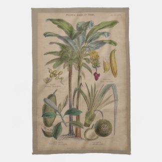 Antique Botanical Print - Tropical Fruit Kitchen Towel