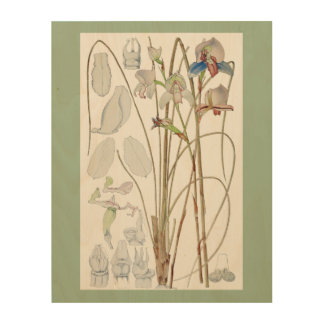 Antique Botanical  Print Wood Wall Art
