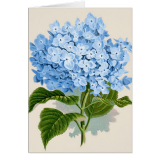 Antique Botanical Romantic Blue Hydrangea Card