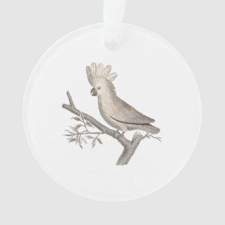 Antique Engraving of a Cockatoo Histoire Naturelle