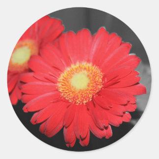 Antique Gerber Daisy Round Sticker