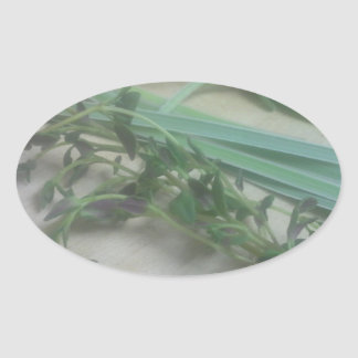 Antique Herbs Photography Oval Sticker