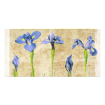 Antique Irises - Vintage Iris Background Customise