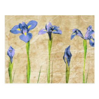 Antique Irises - Vintage Iris Background Customize Postcard