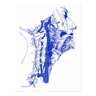 Antique Medical Image Human vertebral arteries Postcard