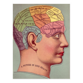 antique Mind Brain Map Phrenology head Postcard