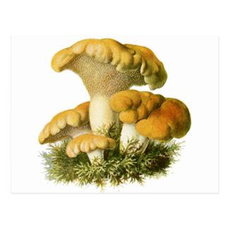 Antique Mushroom Print 13 Postcard