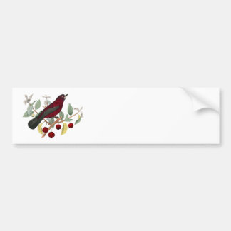 Antique Natural History Bird Print Red Finch Bumper Stickers