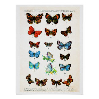 Antique plate, butterflies of Europe: plate 6 Posters