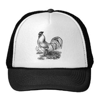 Antique Print Vintage Rooster Cockerel Cap