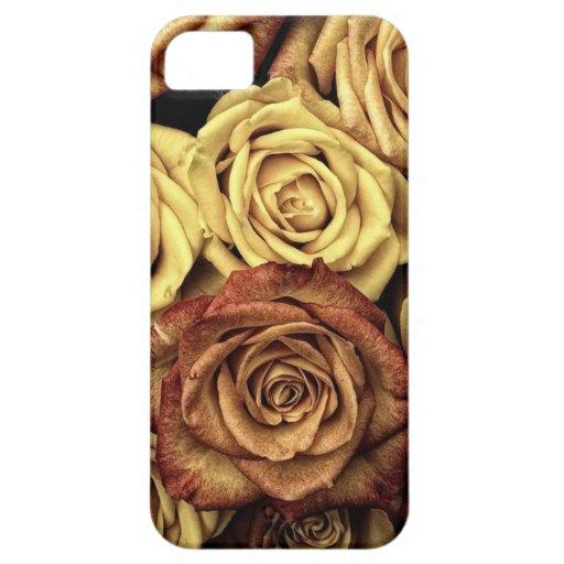 Antique Roses iPhone 5 Cases
