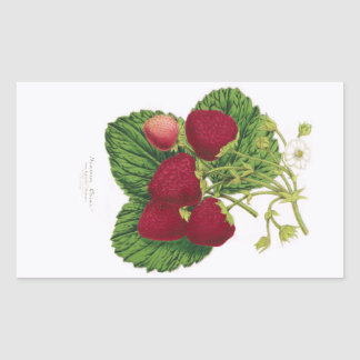 Antique Strawberry Print Sticker