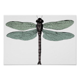 antique typographic vintage dragonfly poster