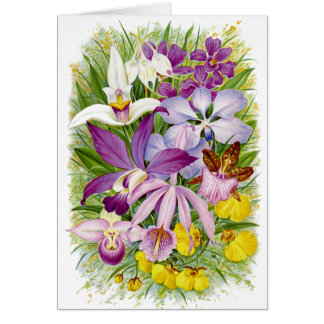 Antique/Vintage Orchids Floral Notecard