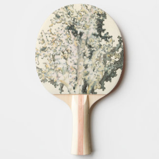 Antique Watercolor Coral Ping Pong Paddle