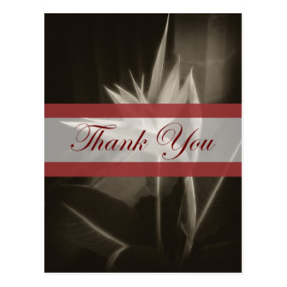 Antiqued Bird of Paradise 10 Thank You Post Card