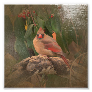 Antiqued Cardinal Photo Print