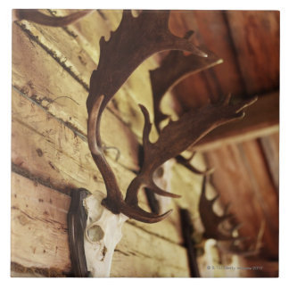 Antler Collection Tile