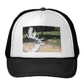 Antlers Cap