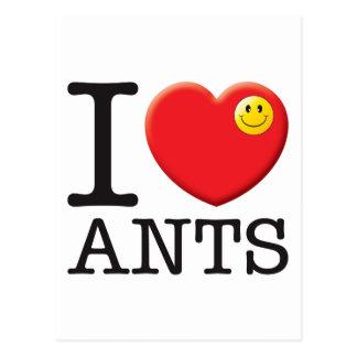 Ants Love Postcard