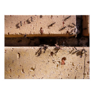 Ants Posters