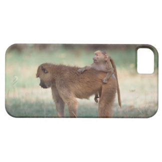 Anubis Baboon iPhone 5 Case