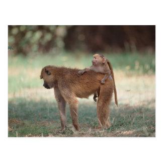 Anubis Baboon Postcard
