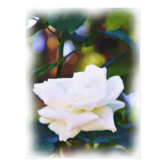 Any Occasions,The White Rose_ Postcard