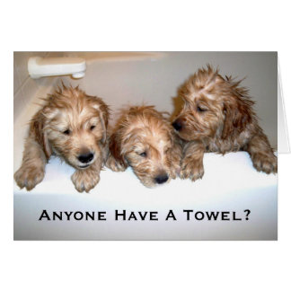 Anyone Have A Towel? Greeting Card