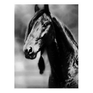 Apache horses post card