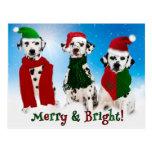 APAL - Christmas Dalmatian Dogs