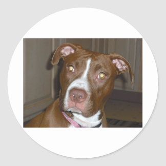 APBT American Icon & Family dog Round Sticker