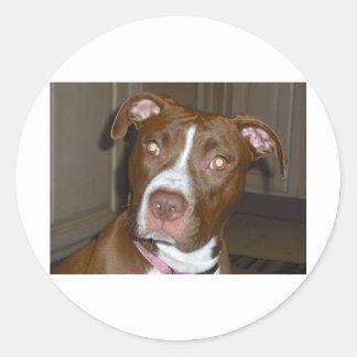 APBT American Icon & Family dog Round Sticker
