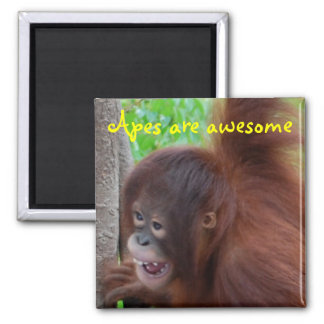Apes are Awesome Magnet