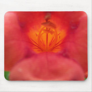 Aphids on Orange Trumpet Vine Flower Mouse Pad